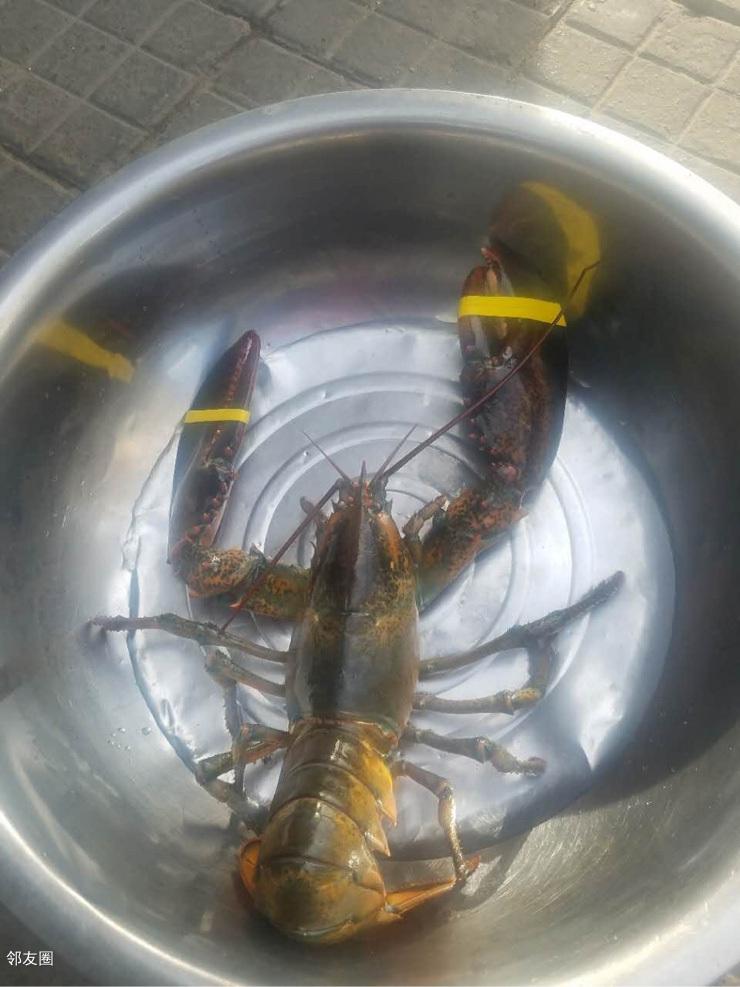 四斤多的大龙虾