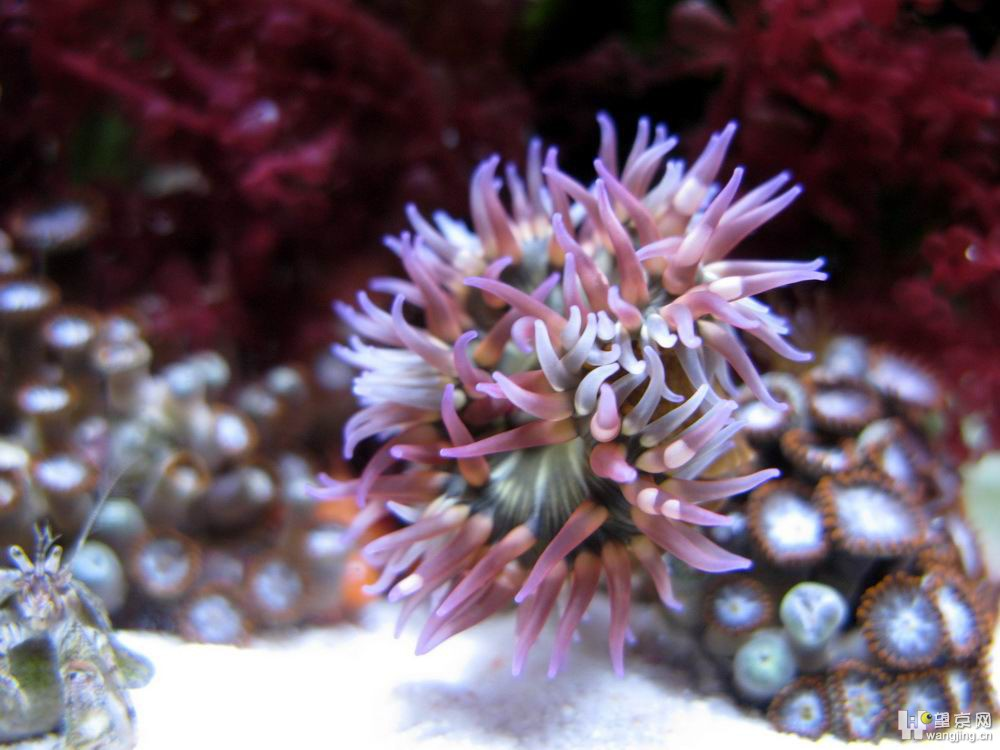 我的小丑鱼生态缸